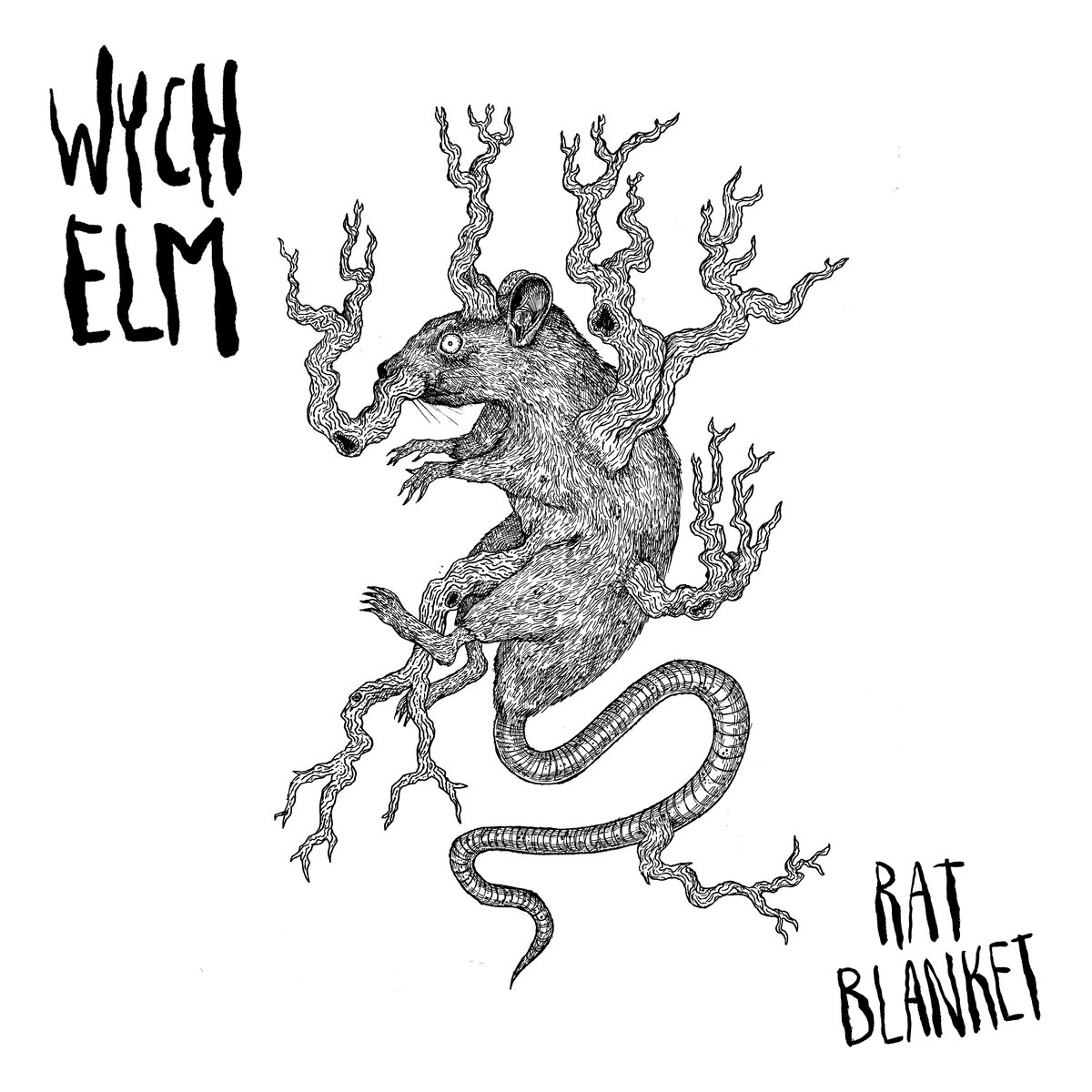 wych elm - rat blanket